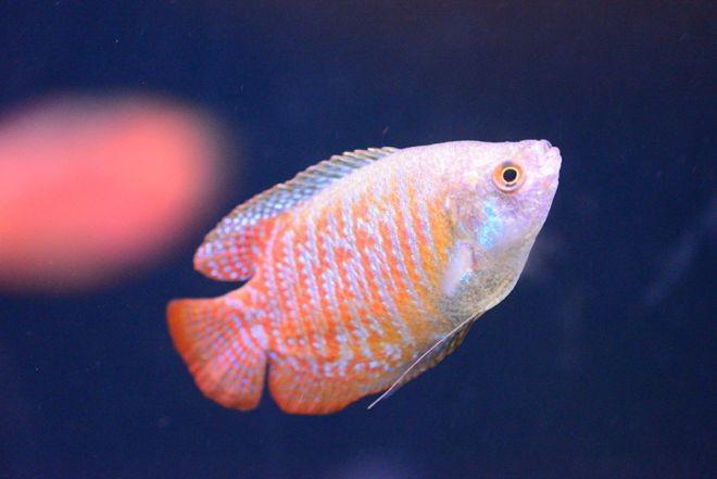 5. Лялиус животный мир, море, природа, путешествия, рыбки