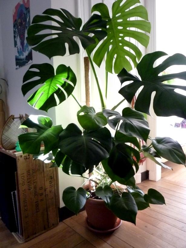 Растения в кадке