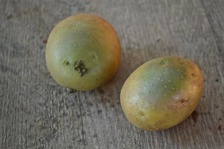poisony09 10 ядовитых фруктов и овощей, которые мы едим каждый день