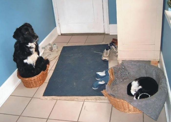 кошки забравшие кроватки у собак, кошки в собачьей кровати, кошки спят на собачьей лежанке