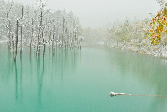 Зеленые воды пруда и первый снег.