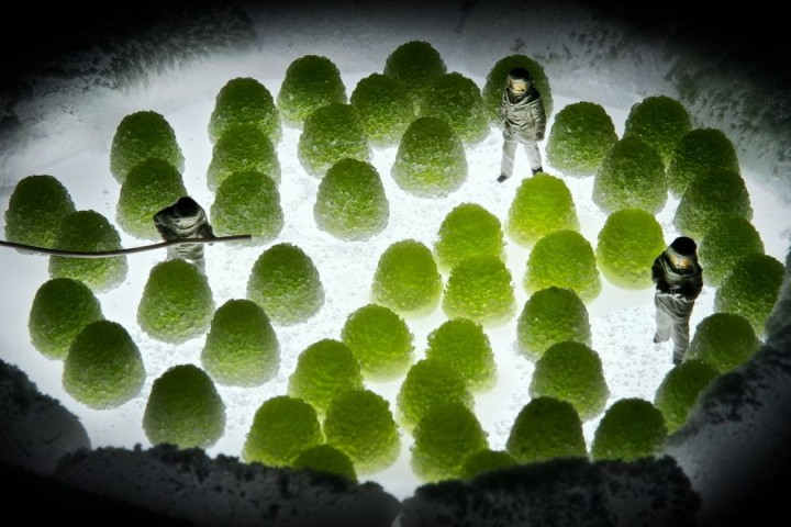 TinyPeople11 Людишки в съедобной вселенной