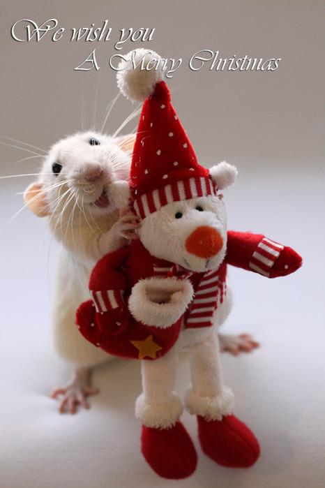 Крыса вручает подарок. Эллен ван Дилен. Фото
