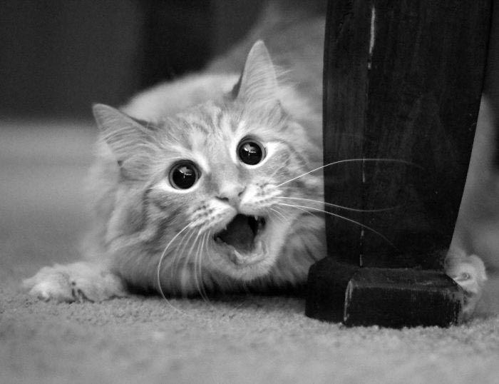 шокированные животные, животные в шоке, смешные животные