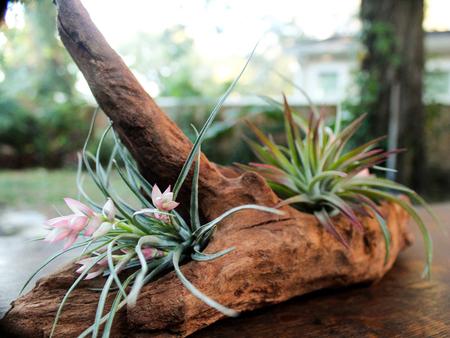 «Воздушные» растения: 14 забавных идей для дома фото 6