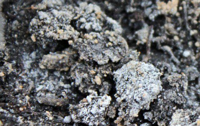Главные признаки засаливания почвы – белые или желтоватые пятна на поверхности