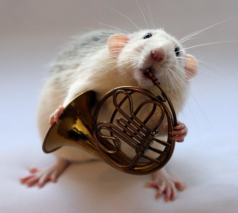 Мой, картинки с днем рождения с крысами
