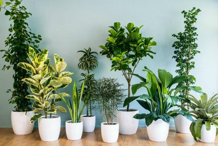 Удобрение для комнатных растений.