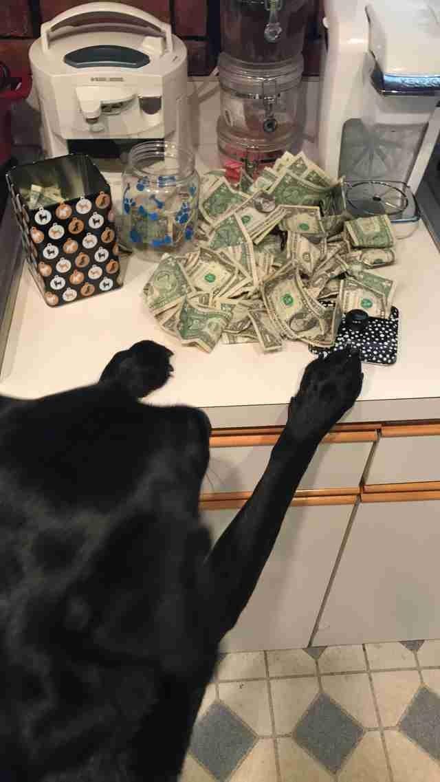 Есть у Холли и еще одна черта: она не прочь одолжить денег, но только под целевые траты в мире, деньги, животные, интересное, истории, прикол, собака