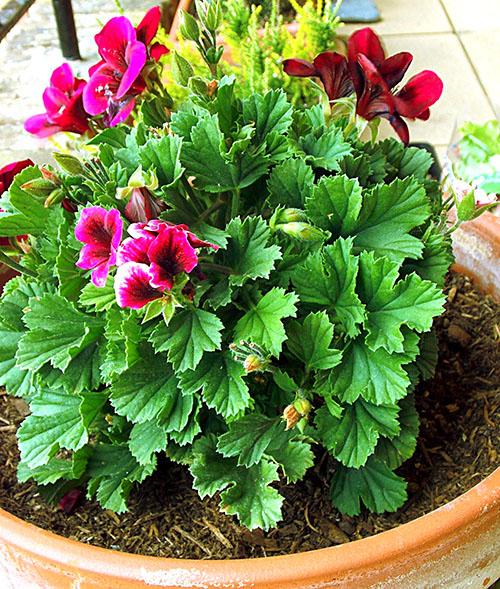 Своевременный полив поможет растению выглядеть хорошо
