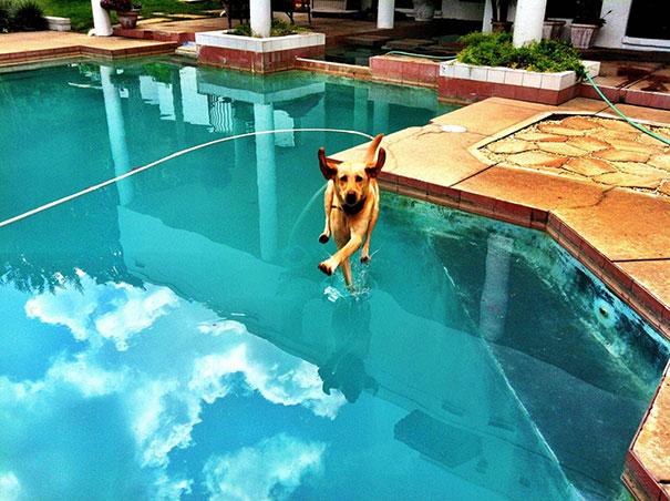 25 удачных кадров с собаками-77