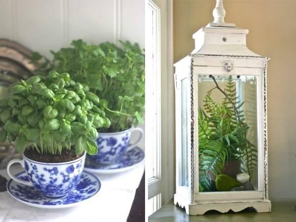 Украшение дома с комнатными растениями