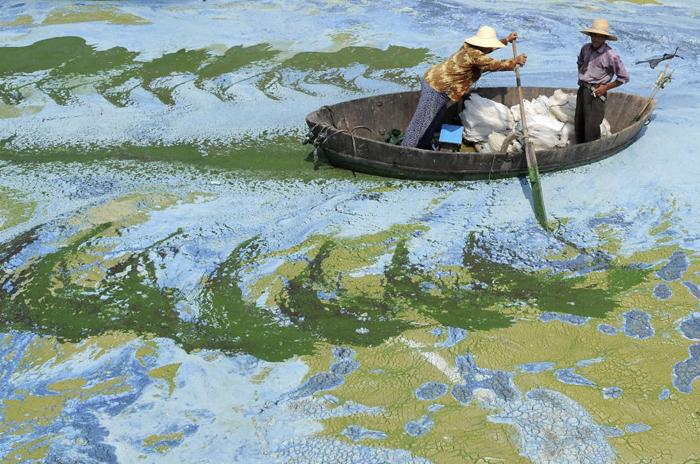 Сильное заиление пресноводного озера.