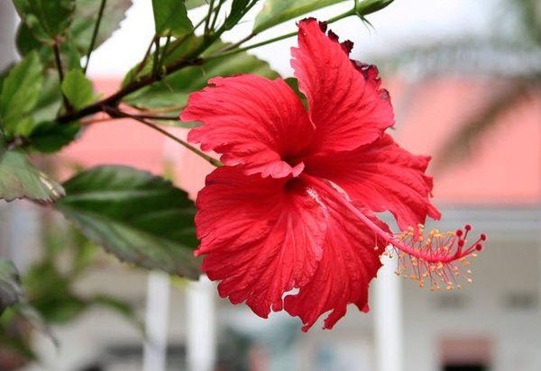 Цветку нужна температура +18–25 °C