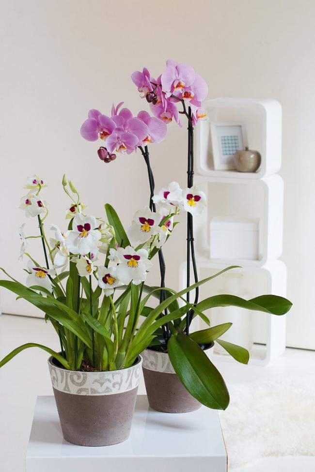 Нежные керамические горшки нейтрального цвета для орхидей, подойдут для цветов любого оттенка