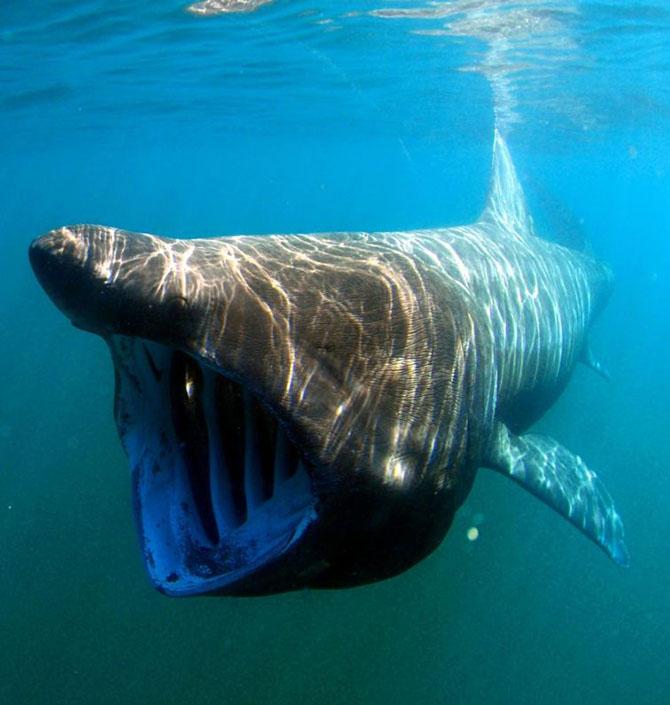 11 абсолютно безвредных животных, которых люди боятся до смерти