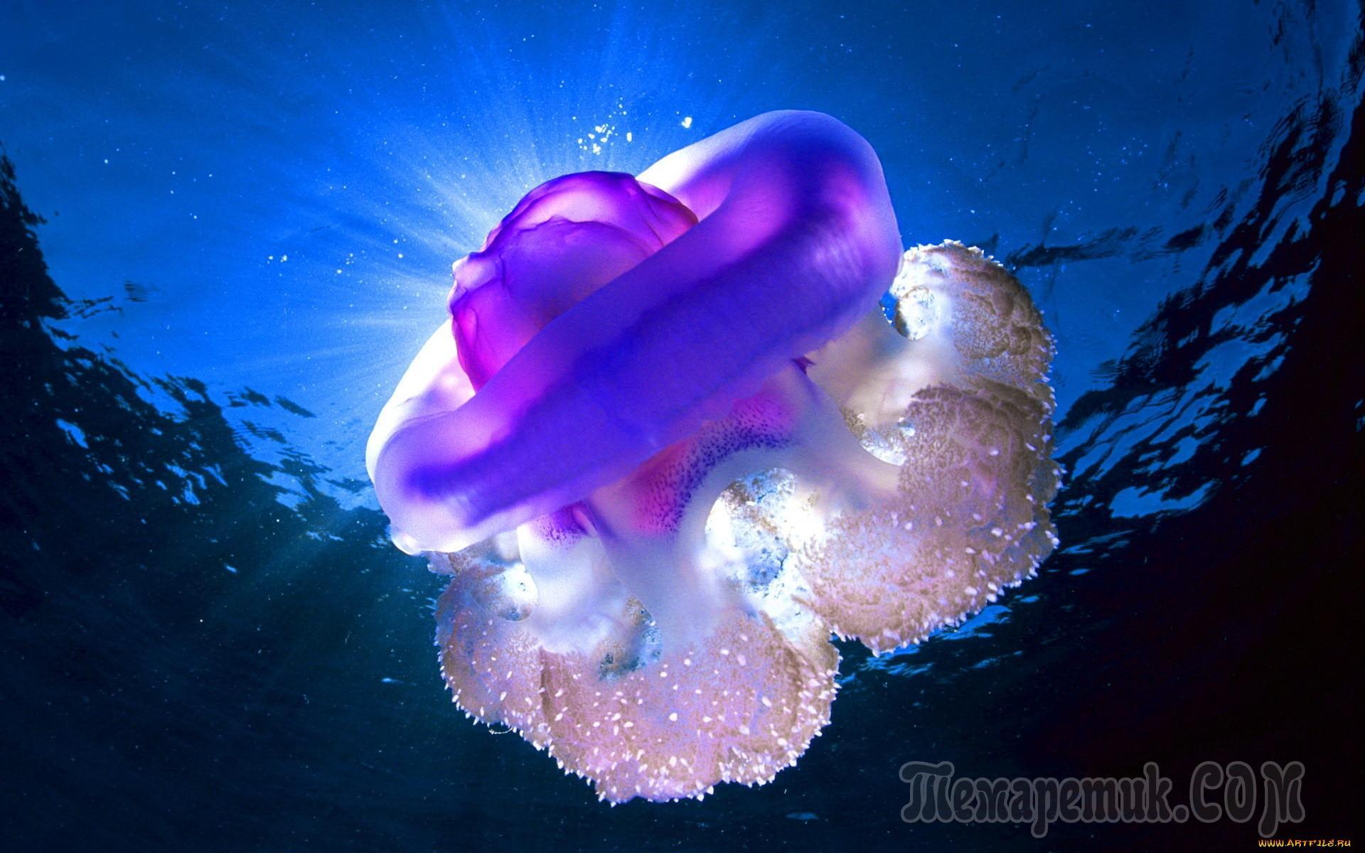 Красивые картинки медузы