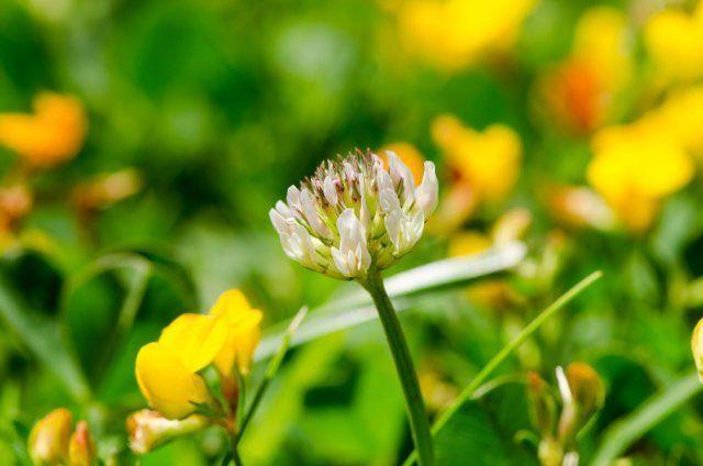 Тип почвы на участке – как определить и улучшить структуру Сад и огород,огород