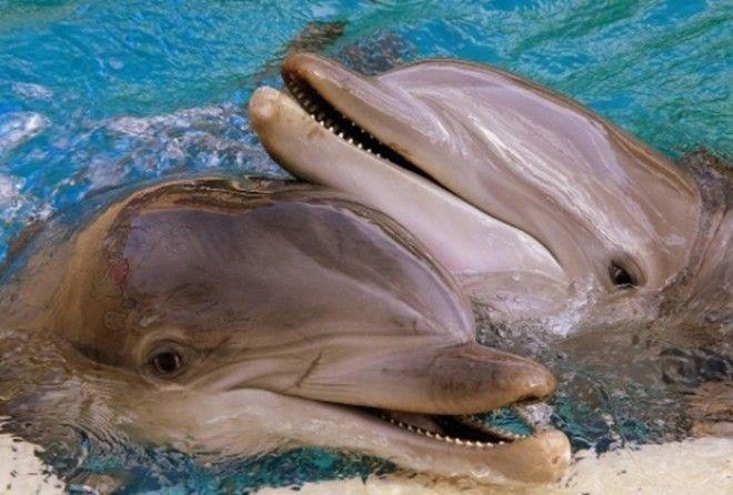 Что скрывается за навязанным нам образом улыбчивого и дружелюбного морского обитателя?
