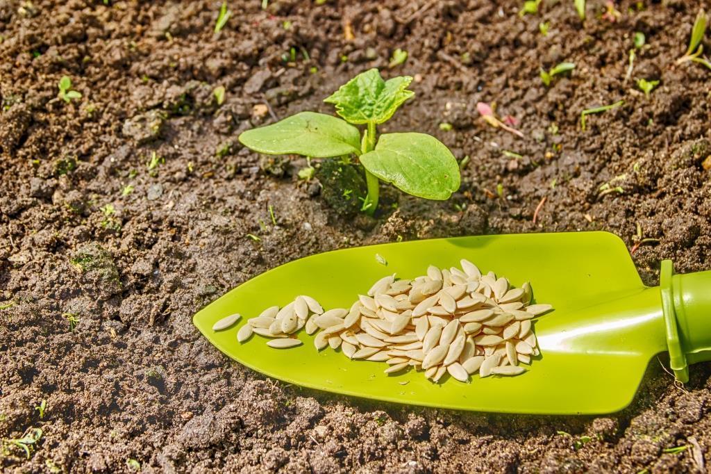 грудничок выгибает как посадить семена кабачков на рассаду факты жизни Суворова