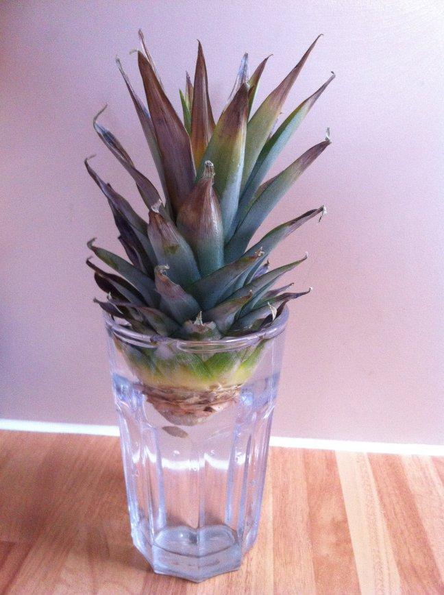 Декоративный ананас в стакане