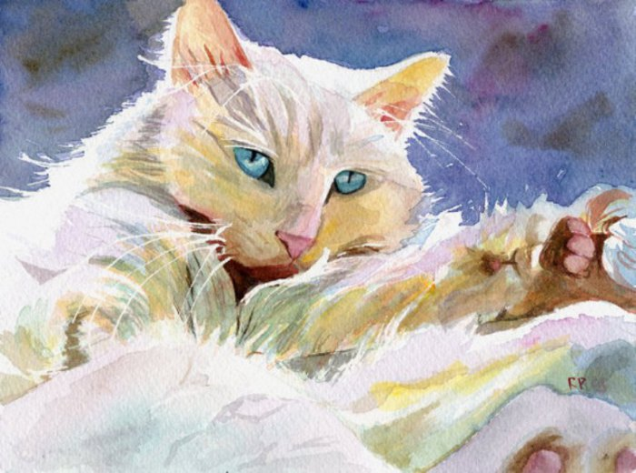 Персидская кошка. Автор: Rachel Parker.