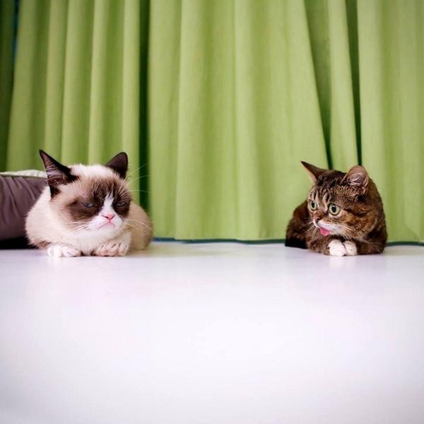 best kitten food brands 2015