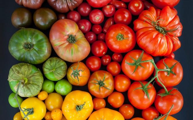 Что дает лучший урожай: чистые сорта овощей или гибриды