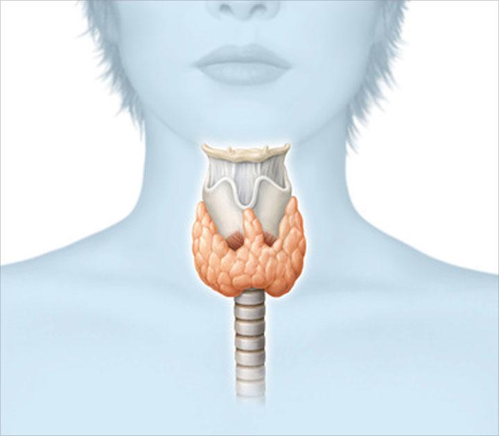 Щитовидная железа: когда стоит бить тревогу - фото 2