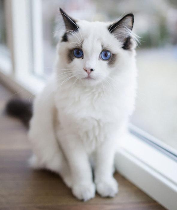 Эти глаза цвета океана.