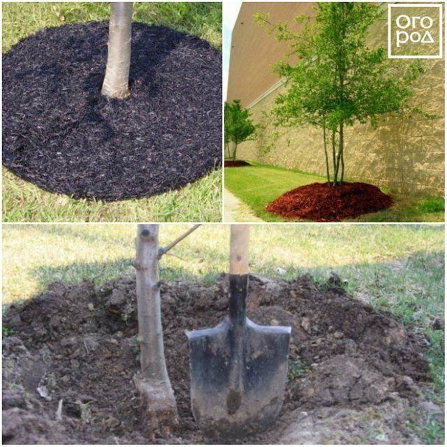 Мульчирование стволов деревьев