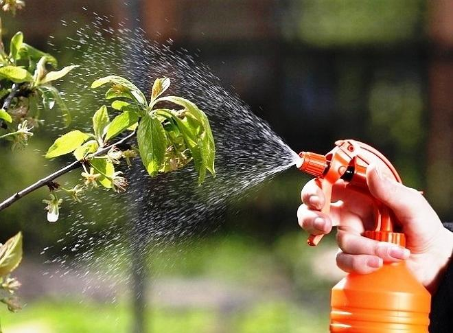 как сделать удобрение для комнатных растений из луковой шелухи