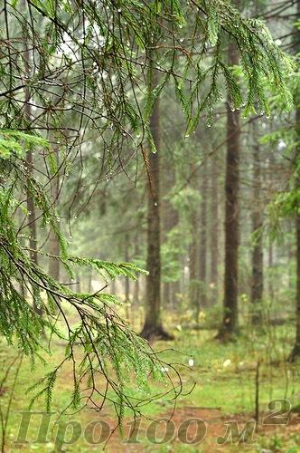 Дверь, ведущая в лес: экодекор обычной двери