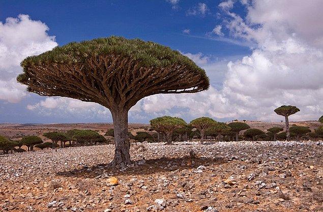 Деревья неземной красоты, которые вы никогда не забудете