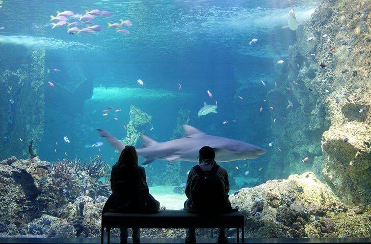 sidnejskij-akvarium