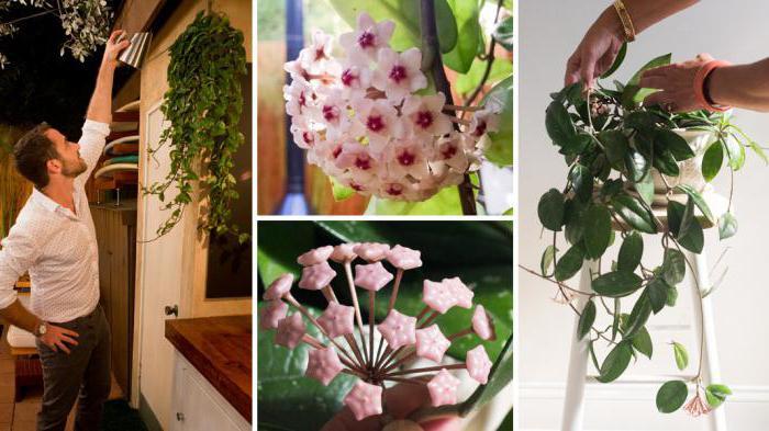 тенелюбивые растения для дома неприхотливые