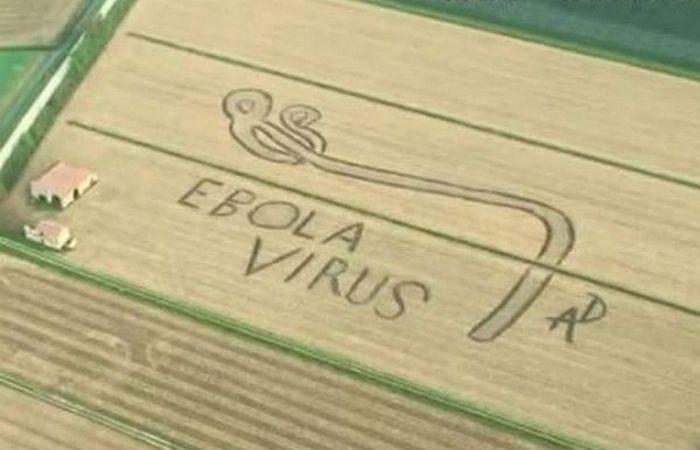 Рисунок на поле «Вирус Эбола».