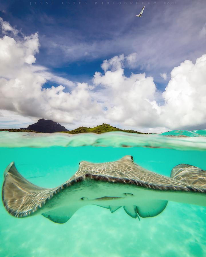 45 belas fotografias subaquáticas a partir do qual pára de respirar