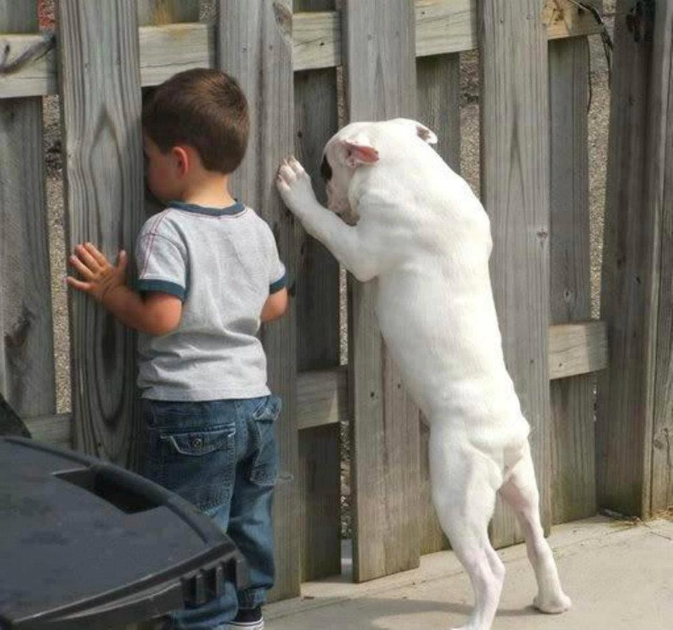 Животные любопытство которых не имеет границ