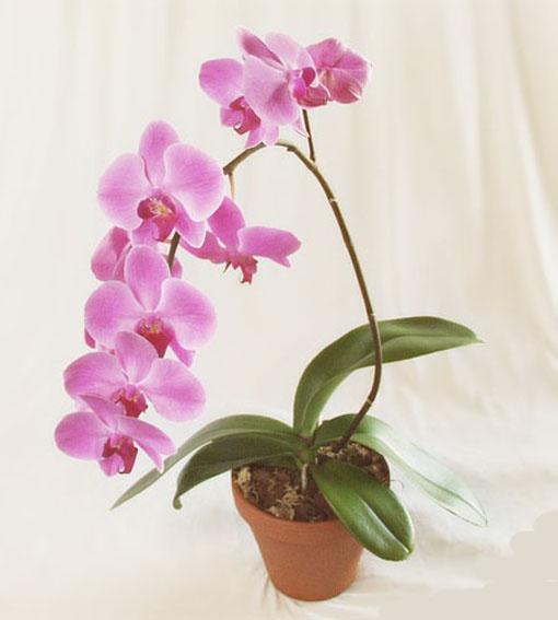 посадка орхидеи