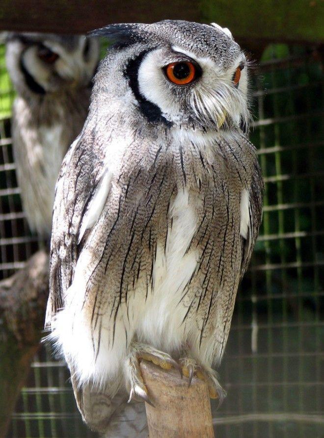 10 птиц с самыми необычными защитными механизмами защита птицы