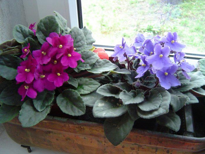 Омоложение растения