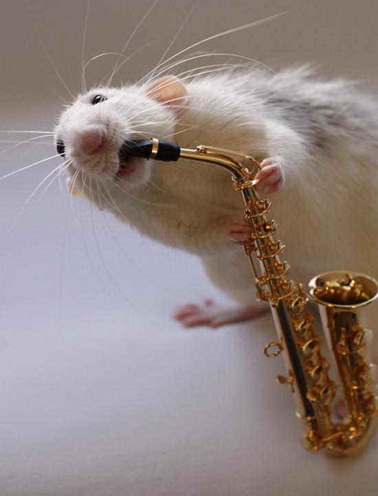 Крыса играет на саксофоне. Эллен ван Дилен. Фото