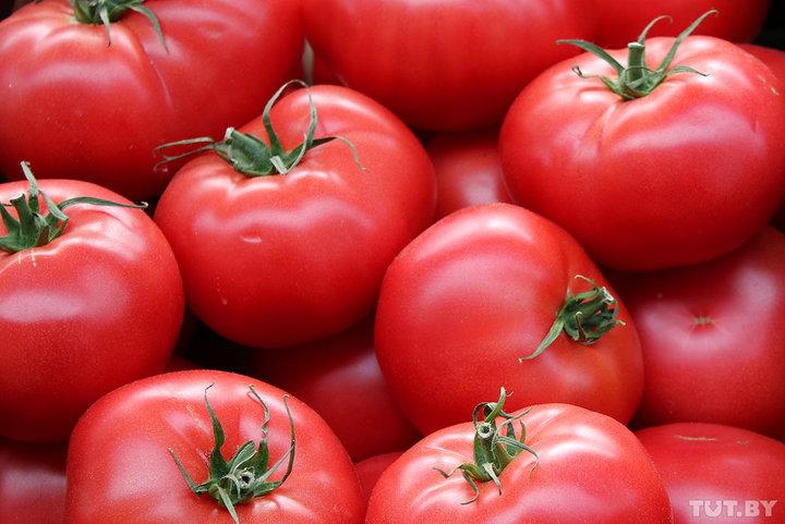 Фермеры: «В этом году помидоров море, никто не берет» | ТЕЛЕСКОП | Новости  Беларуси - Последние новости Беларуси - Белорусские новости