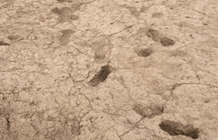 Загадочные следы стоп: отпечатки ног Хохокам.