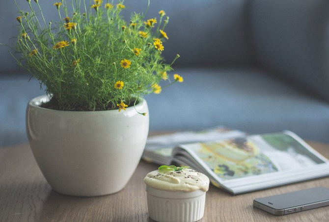 Лунный календарь для комнатных растений и цветов в июне