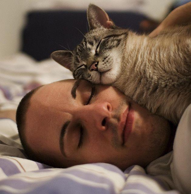 КАКУЮ ПОЛЬЗУ МОЖЕТ ПРИНЕСТИ КОТ кот, польза, интересно