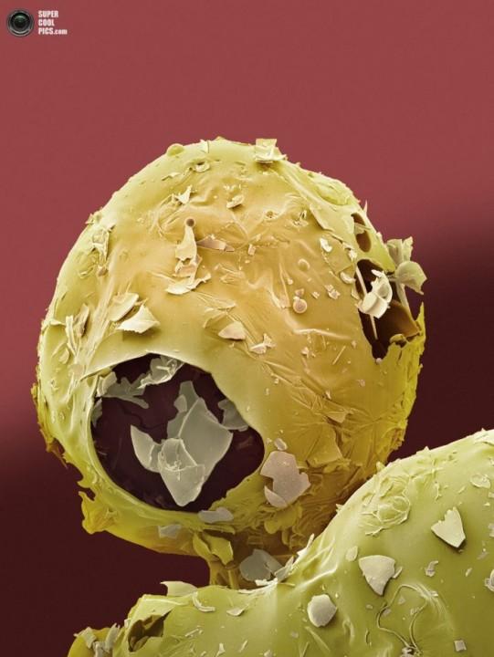 еда, микроскоп
