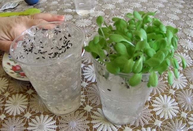 гидрогель для растений, гидрогель для растений как использовать, гидрогель для рассады, как использовать гидрогель для рассады, гидрогель для выращивания рассады, как пользоваться гидрогелем для рассады, как развести гидрогель для рассады, посадка семян в гидрогель, посев семян в гидрогель, проращивание семян в гидрогеле, семена в гидрогеле
