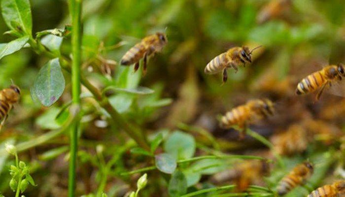 Уникальные возможности пчел.